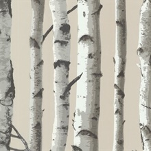 Irvin Grey Birch Tree