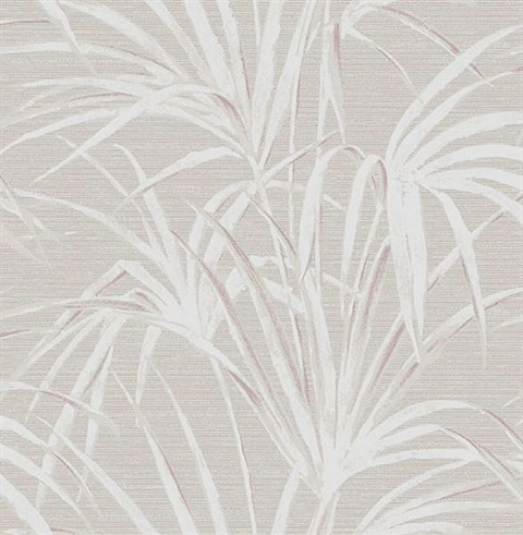 Song Grey Fountain Palm