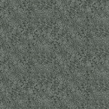 Black & White Champagne Metallic Polka Dots Rifle Paper Wallpaper
