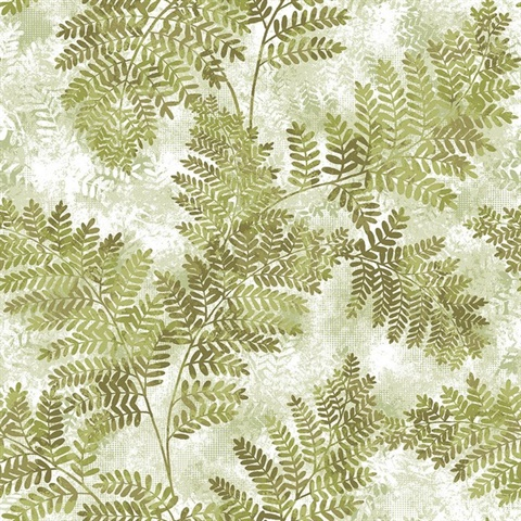 Cyathea Light Green Fern