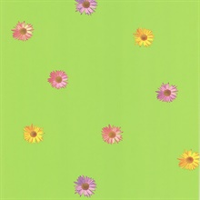 Daisy Green Gerber Daisies Wallpaper