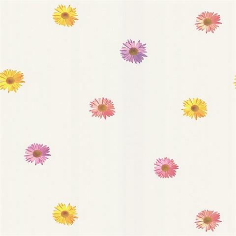 Daisy White Gerber Daisies Wallpaper