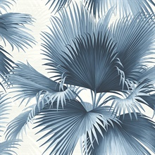 Endless Summer Blue Palm