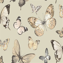 Gold & Beige Commercial Butterflies Wallpaper