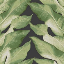 Green Black & Gold Beverly Hills Large Banana Leaf Wallpaper
