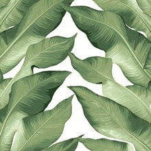 Green & White Beverly Hills Large Banana Leaf Wallpaper