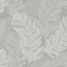 Grey Feathers Wallpaper