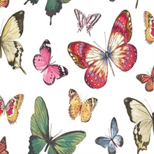 Multicolored Commercial Butterflies Wallpaper