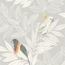 Paradise Oriole and Parakeet Bird Light Grey Wallpaper