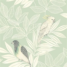 Paradise Oriole and Parakeet Bird Mint Green Wallpaper