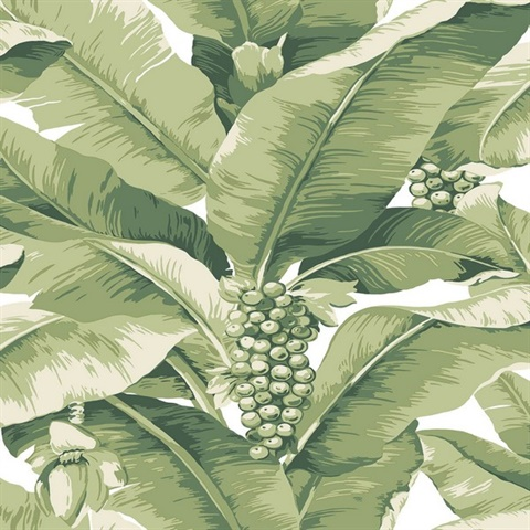 Paradisio Tropical Palm Tree Green Wallpaper