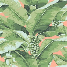 Paradisio Tropical Palm Tree Pink Wallpaper