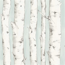 Pioneer Light Blue Birch Tree