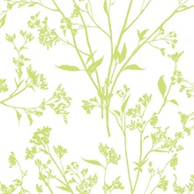 Southport Chartreuse Coastal Branches Wallpaper