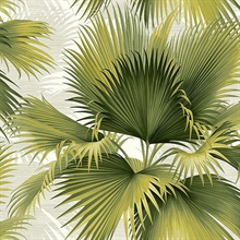 Summer Palm Green Tropical Leaf Wallpaper