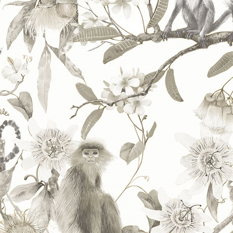 Taupe Monkey Flowers