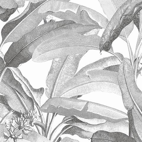 Tropical Polynesian Black & White Leaves Wallpaper